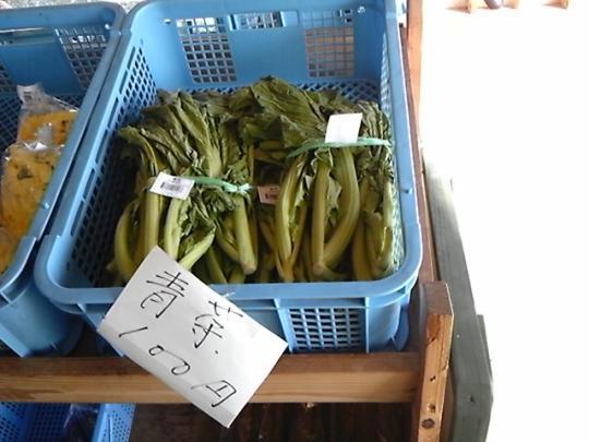 プルーン系植物育成状況1