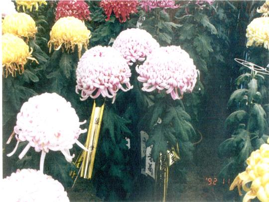 鑑賞植物2